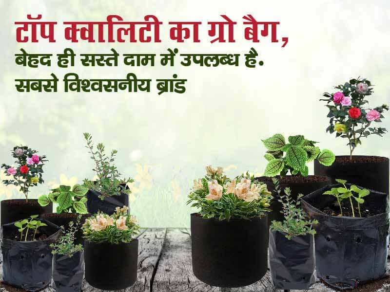 Agri Junction |Buy Seeds Online| Buy Plants| Organic Pesticides In India| Agricultural Tools promo
